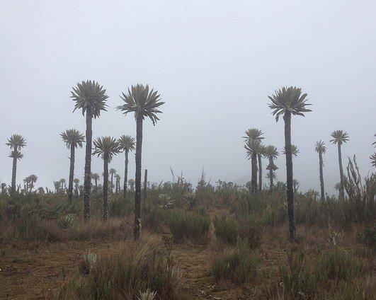 Parque Natural Chingaza