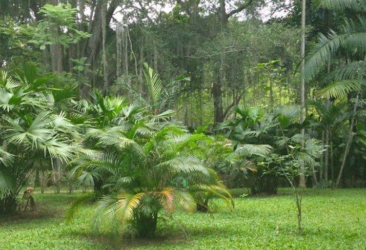 Visita los Jardines Botánicos