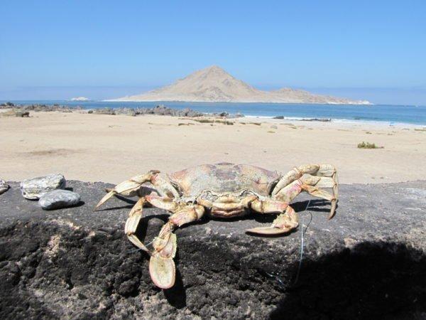 playas de antofagasta