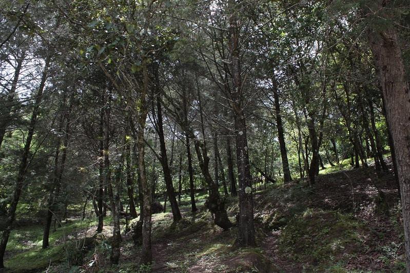 cinco lugares para acampar en tecate bosque