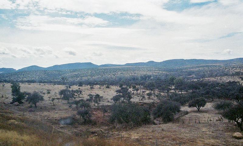 bosque de guadalajara