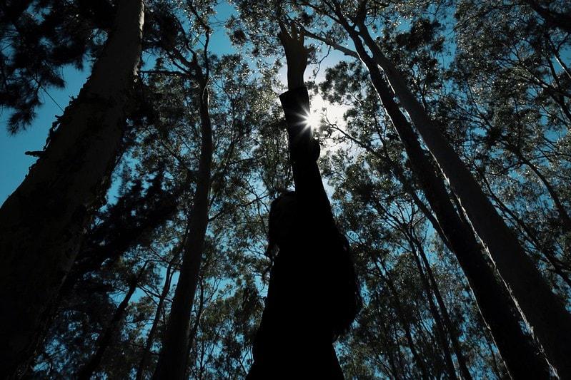 bosque con arboles altos en jalisco