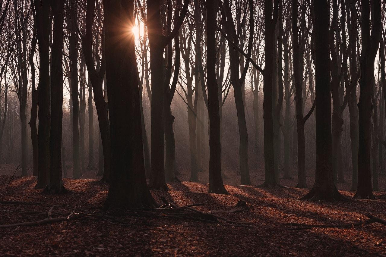lugares acampar queretaro bosque