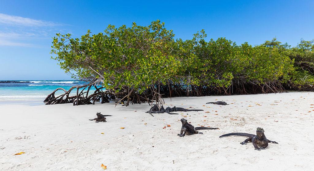 Playas De Salvador De Bahía